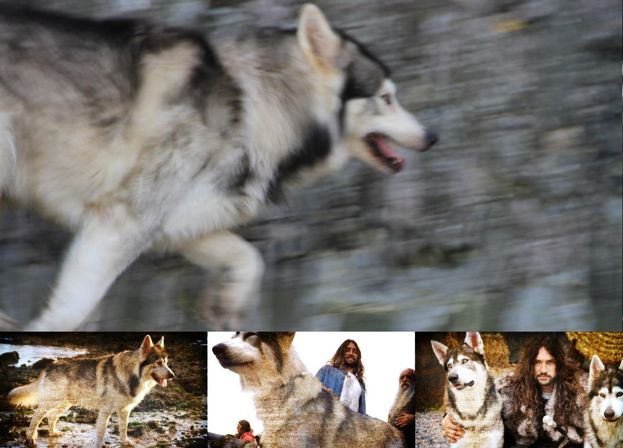 Meet the real life Direwolf dogs on this Game of Thrones tour
